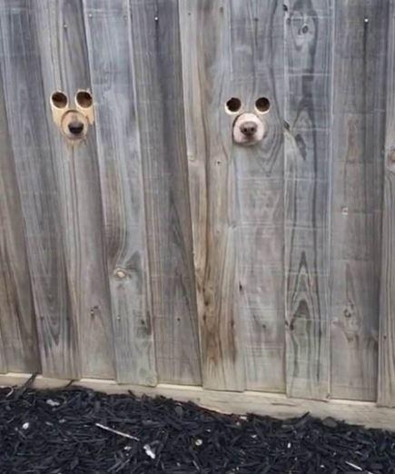 柵欄被挖3個洞...狗媽發「迎接照」融化世界:我家也要打!