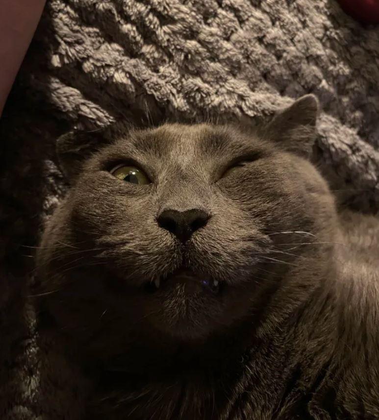 網發起「貓貓醜照」挑戰 牠「氣到炸毛」:敢拍你死定了!