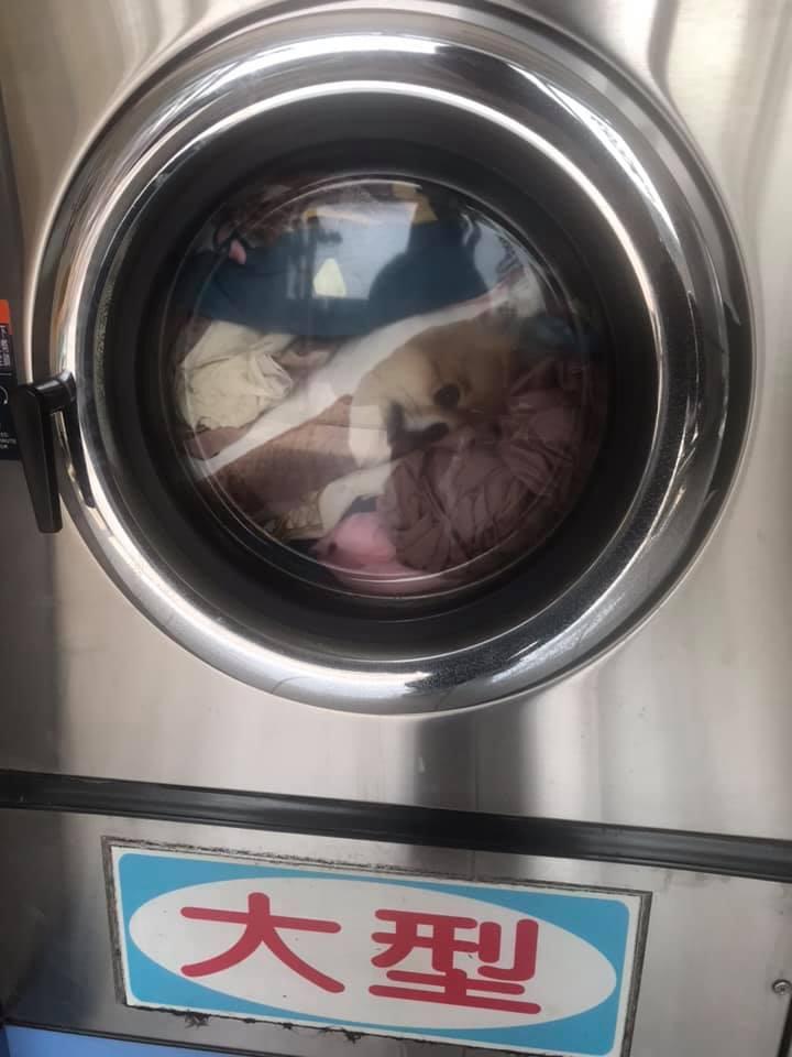 她見「狗狗被困洗衣機」嚇壞 網罵「見死不救」才知誤會大了