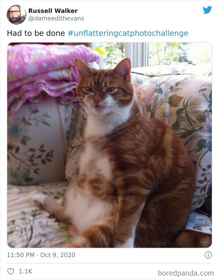 24張「貓咪形象大扣分」崩壞照 牠做「不雅姿勢」讓人想報警