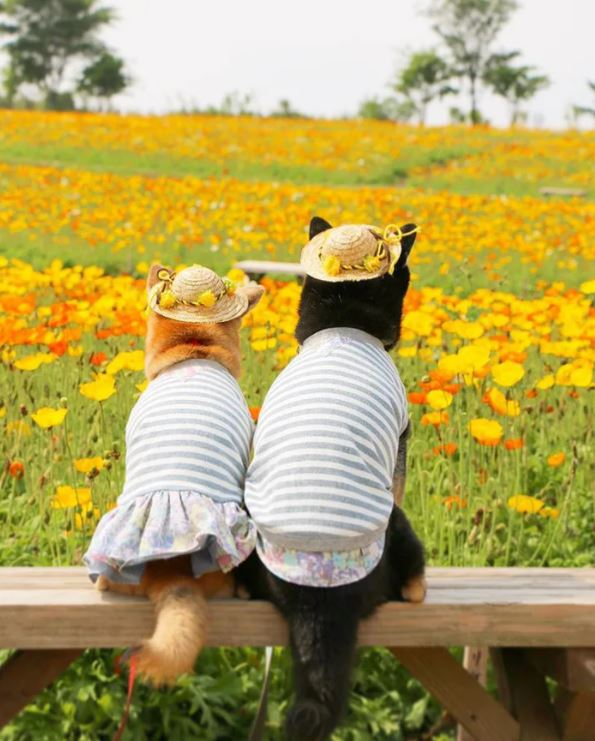 主人為柴柴兄妹拍下「最幸福出遊照」 拍攝動機超鼻酸:時間不多了