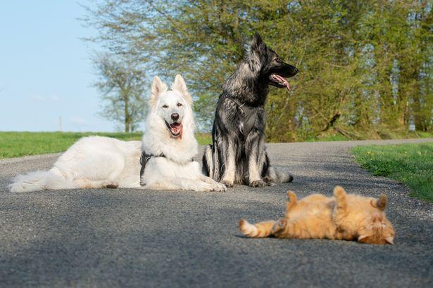 貓皇「跟狗一起長大」被同化 暖汪哥就是小橘貓的守護者❤