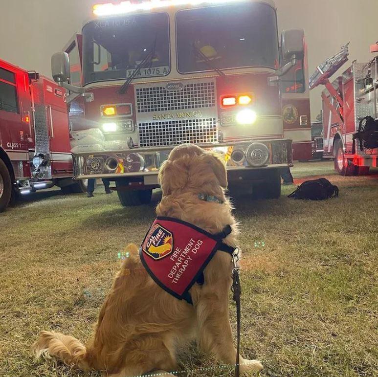 不能沒有牠!出現在火場的「心理治療汪」 每次站前線拯救「消防員的心靈」