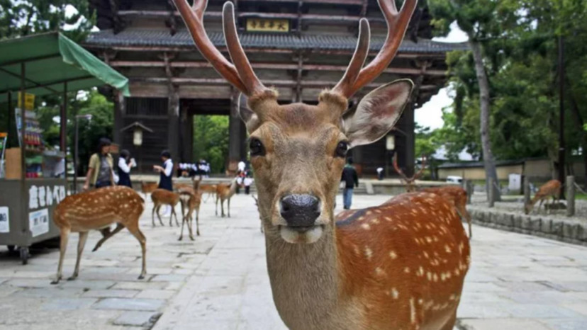 善良男發明「鹿友善袋」 吃下去就消化成功保護動物