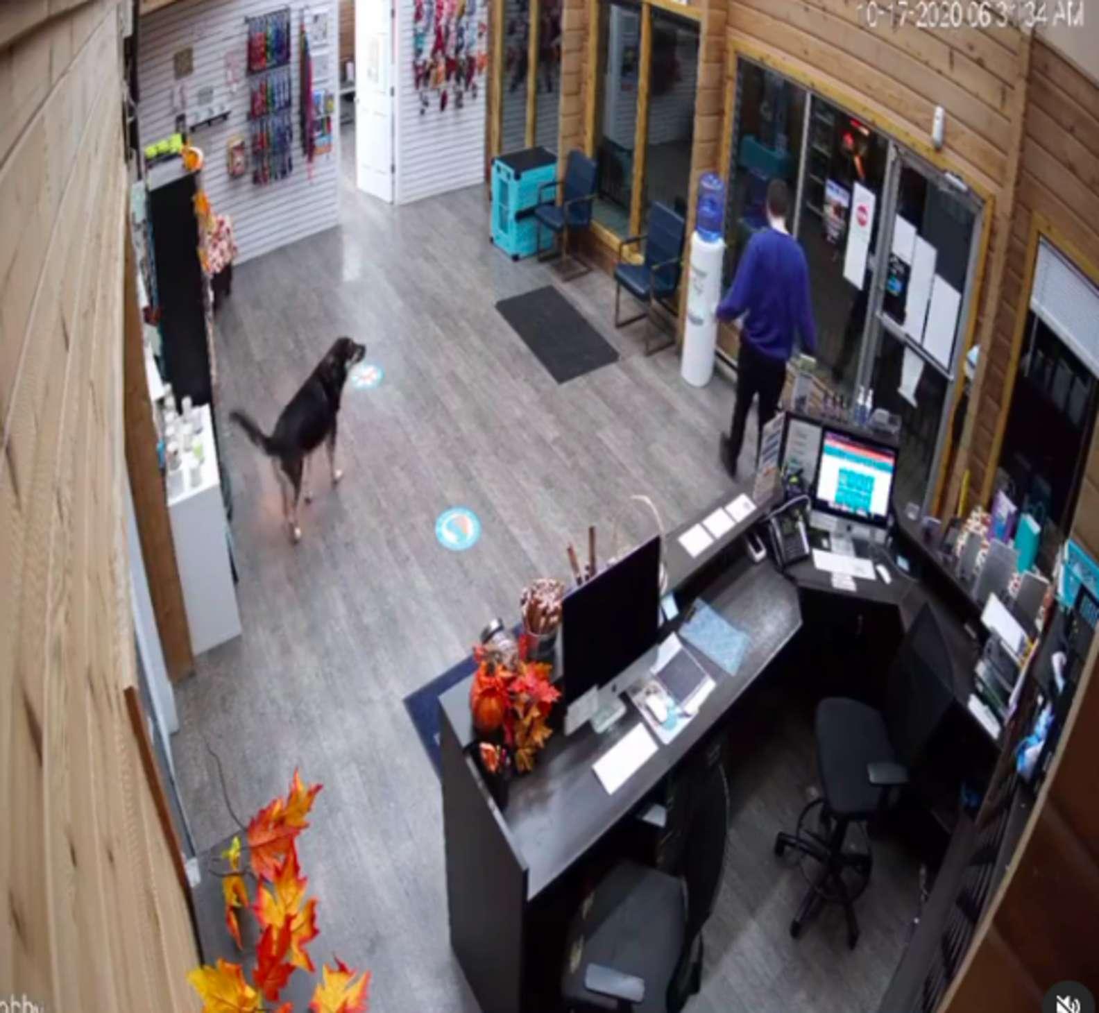 獨立狗「自己上旅館」 尾巴開直升機太興奮:跟朋友有約啦~
