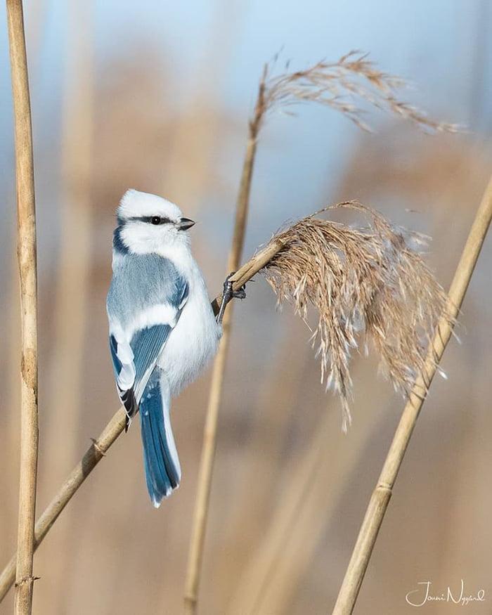 從仙境飛出來?夢幻「藍白仙鳥」眼妝超時尚 美到鳥版「艾莎公主」