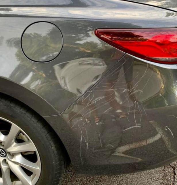 影/我才是最漂亮!孔雀看汽車倒影「跟自己打架」 近看車身太慘了