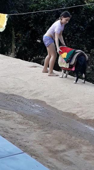 小主人收衣服 溫柔狗定格30秒「變置物架」:我來幫妳❤