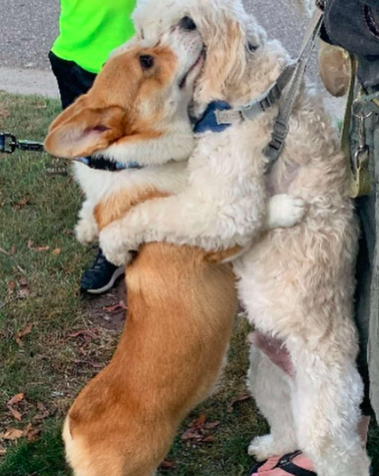 超萌柯基「阿嬤式抱抱」每隻路過朋友 小短腿沒勾好絕不放行❤