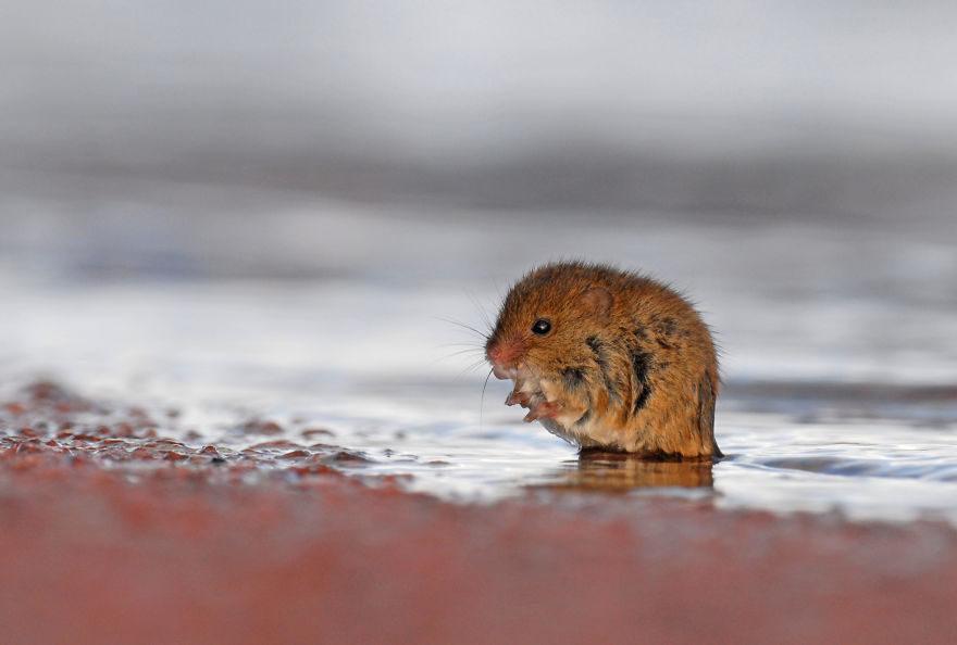他花7年拍攝「風暴來臨」瞬間 小動物「拼盡一切活下來」震撼人心