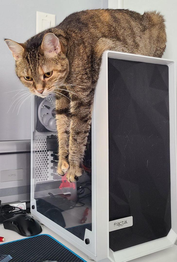 22隻「走到哪都是霸主」的貓皇 狂到操控方向盤不讓走!