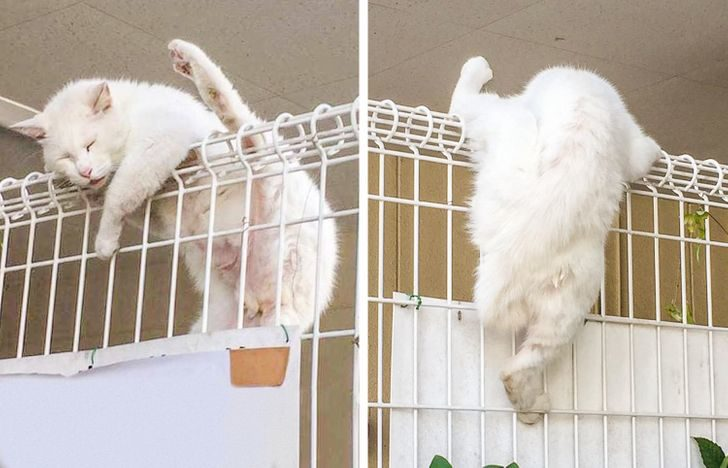 貓咪橫行霸道