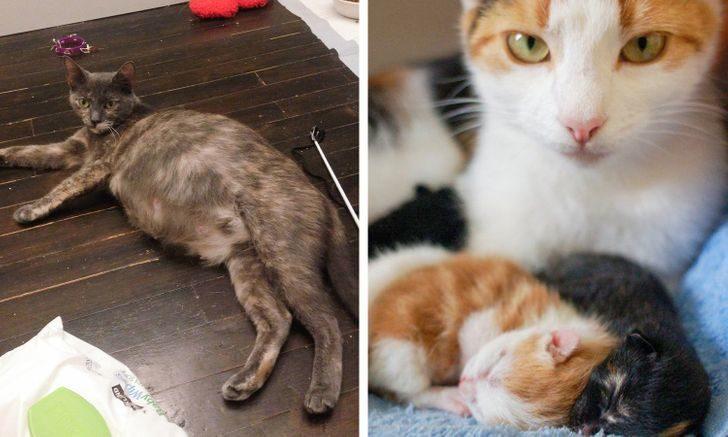動物懷孕週期