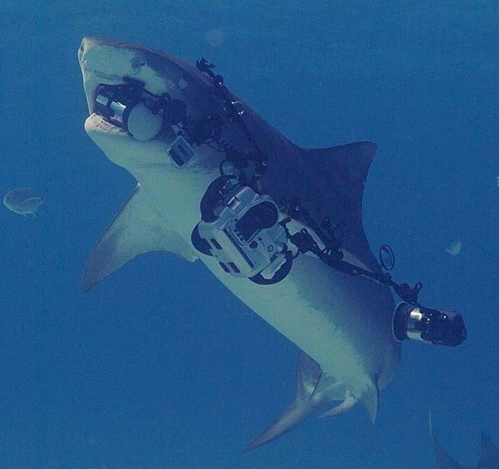 18個「讓強迫症抓狂」的工作蠢事 把「攝影機放海底」被鯊魚偷走