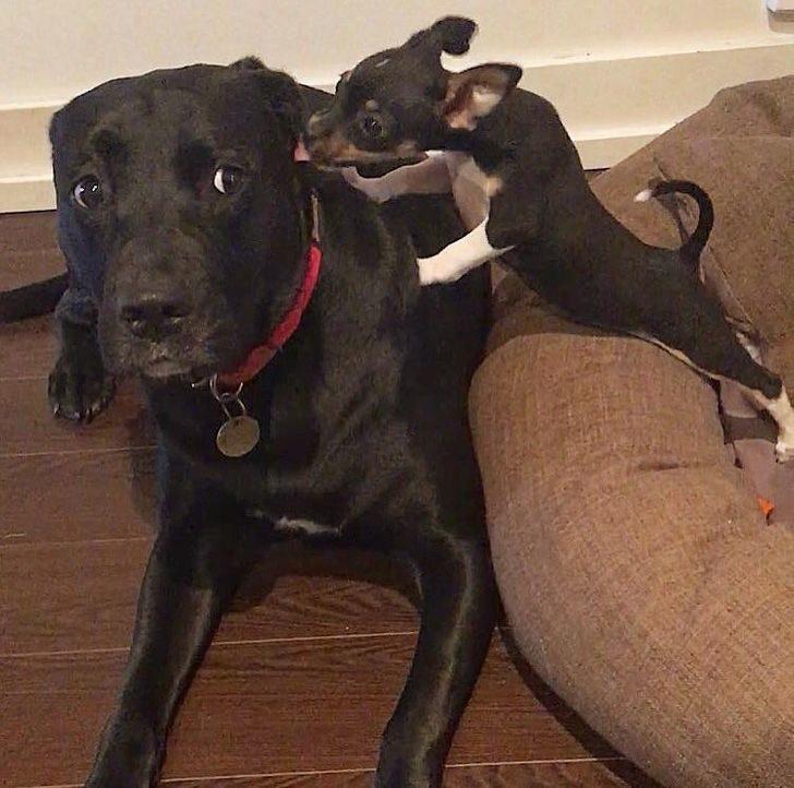 23隻「主人領養新成員」的失寵狗狗 被欺負「只能忍耐」超委屈