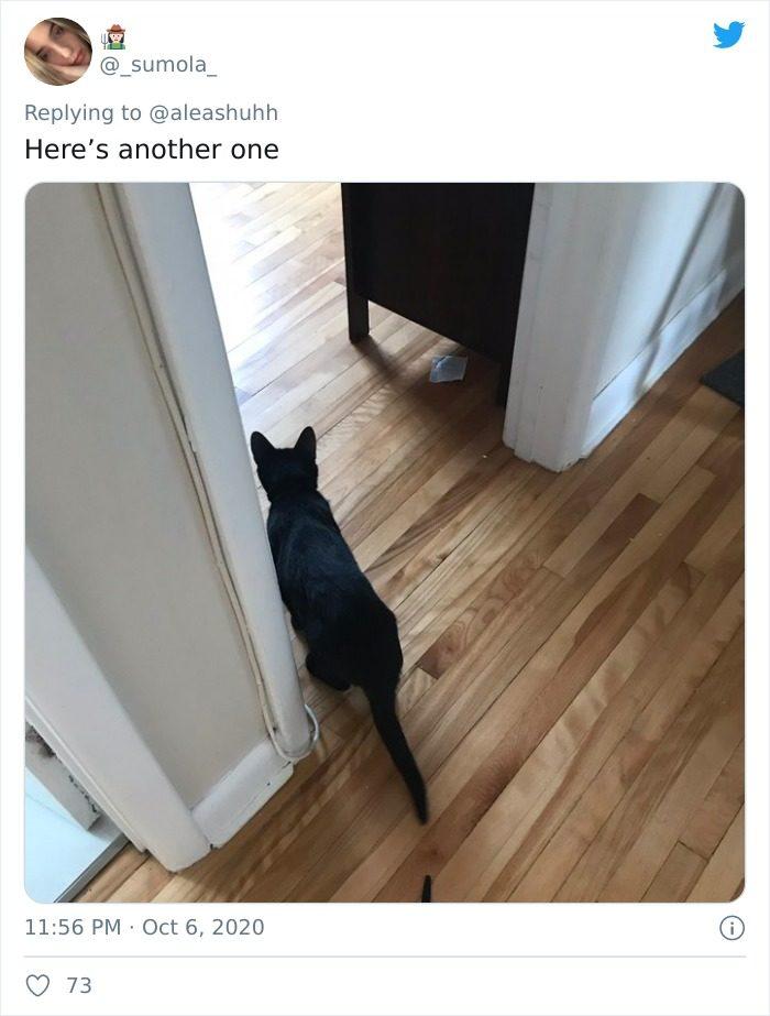 寵物嚇死主人