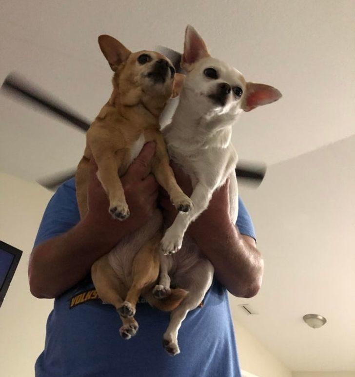 爸爸不想養狗