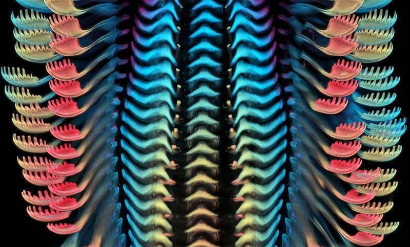 Nikon「微小世界」攝影大賽 「打結的頭髮」跟水管超像!