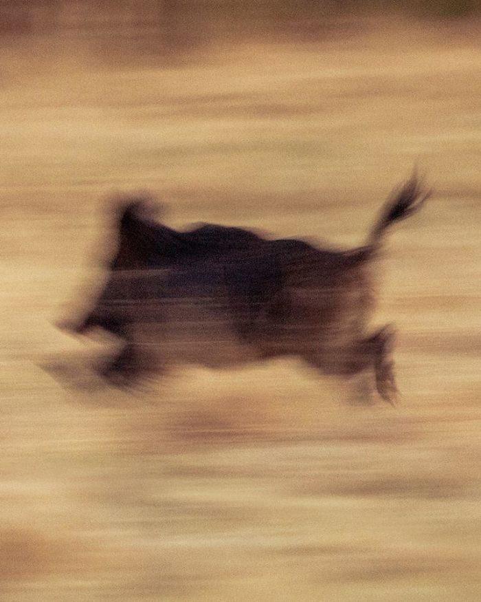 20張根本「迷因界網紅」的搞笑動物照 山豬跑太快竟變「史前壁畫」!
