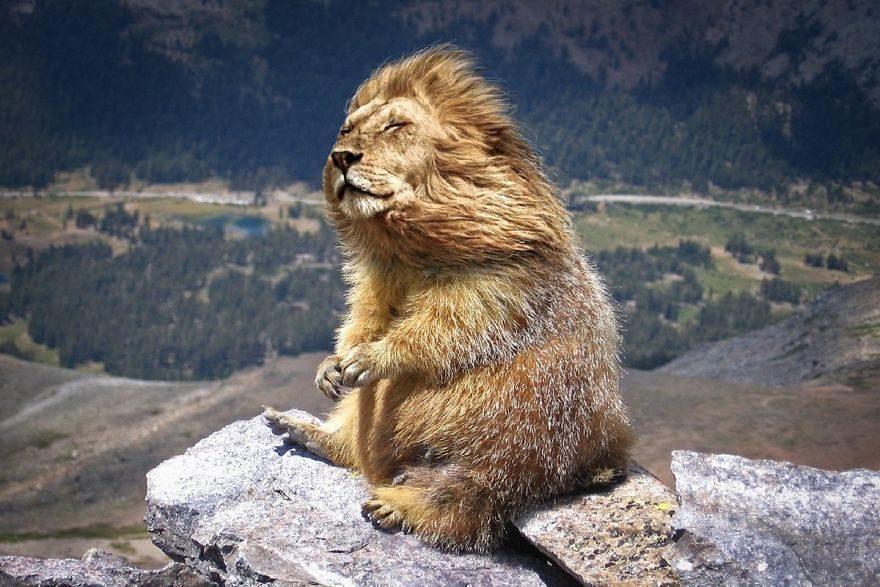20張超混亂「動物融合」大賽 土撥獅萌到想拜託女媧捏一隻
