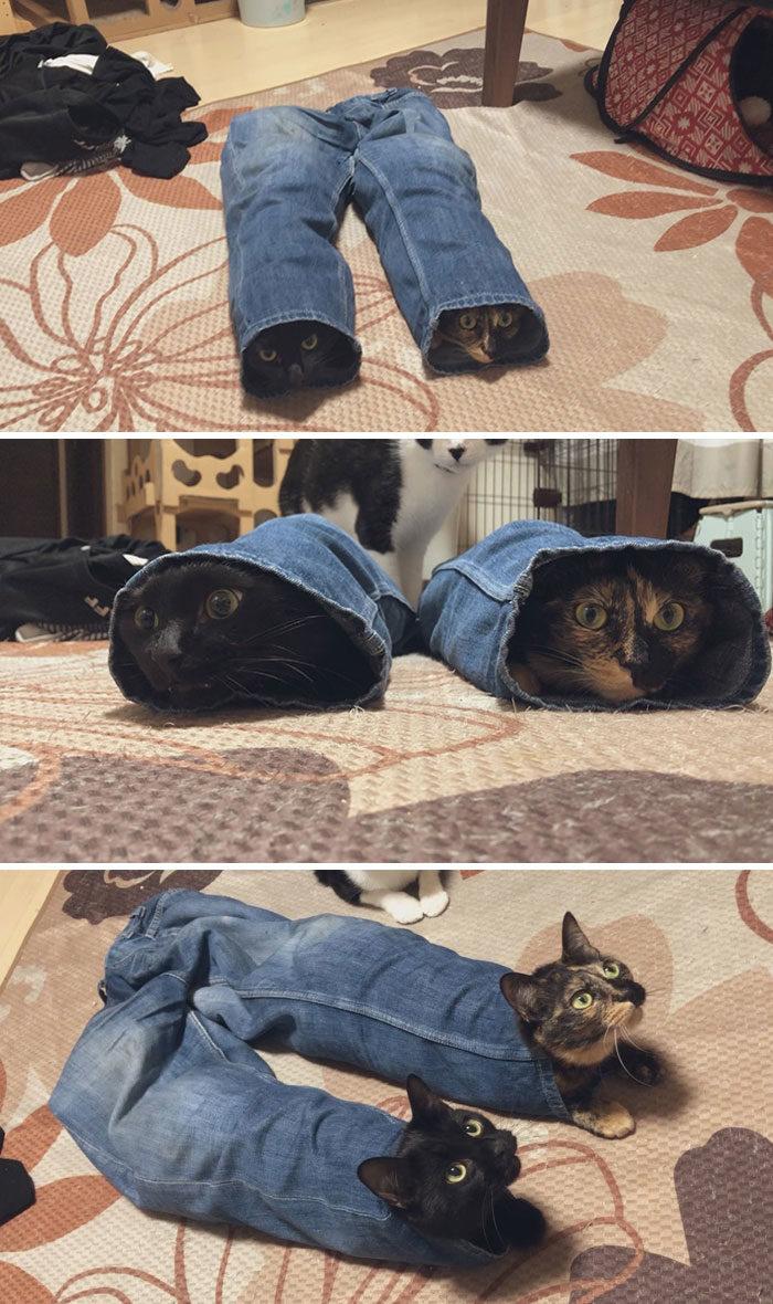 33隻「夢想當諧星」的淘氣壞小貓 神貓「制伏小偷」全場看傻