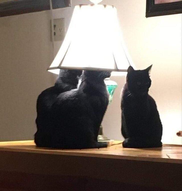 20隻「把自己當人類」的屁孩貓 跟夥伴「開高峰會議」超專業