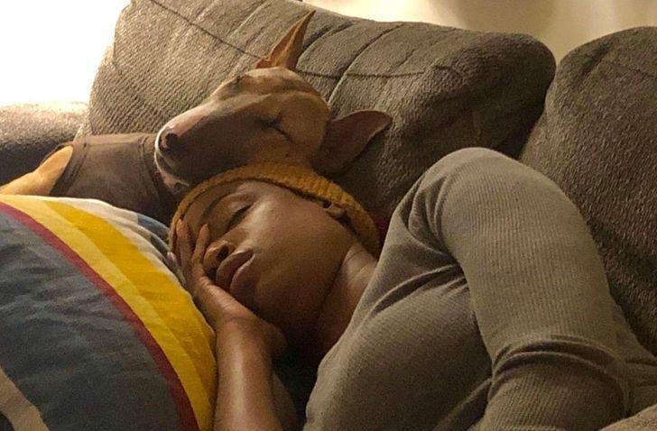 20張證明「毛孩是前世情人」的溫馨照 狗狗「陪睡」讓他戴綠帽?