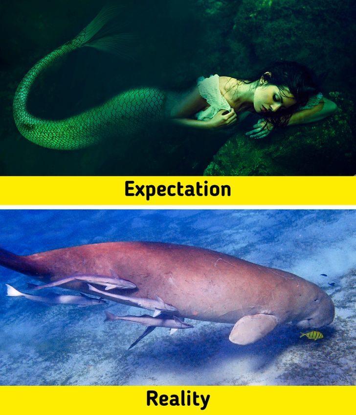 7種傳說生物「實際存在」的證據 美人魚其實是海牛?