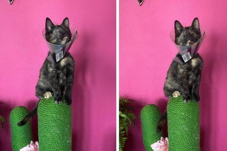 20個寵物的「初次體驗」 貓星人「第一次雪中行走」表情快失控!