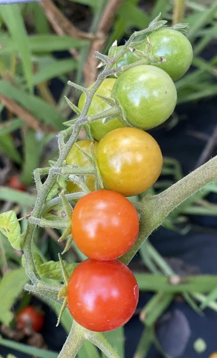 20個「絕對不是修圖」完美巧合照 同時出現「番茄完整週期」