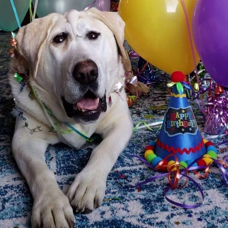 健康狗狗慘被拋棄2次 5年來長滿蟲...現在終於等到「天使主人」!