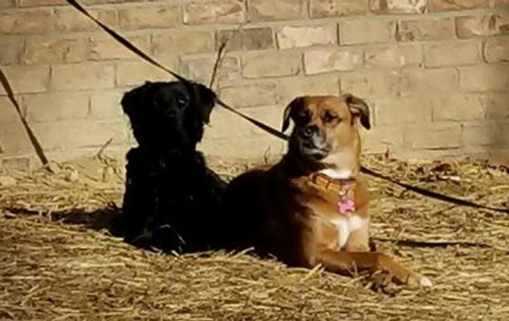 20個當「大自然中了BUG」驚奇照 狗狗的「影子」有生命!