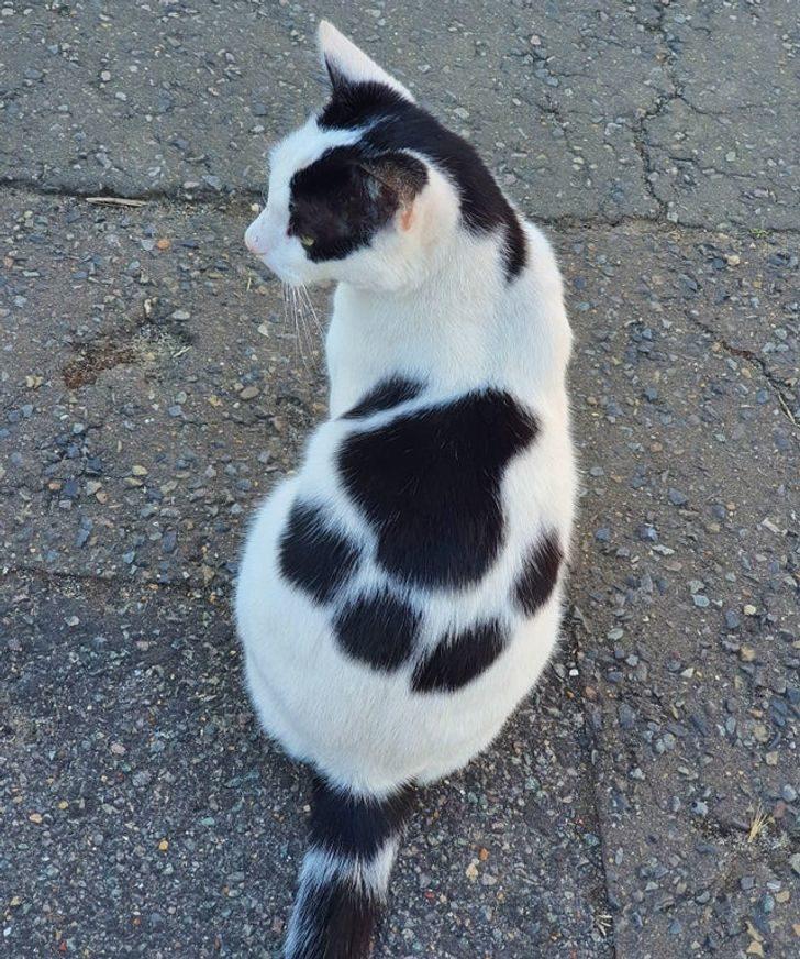 20張「上帝墨水失靈」驚奇照 貓咪頭上有閃電:哈利波特4ni?