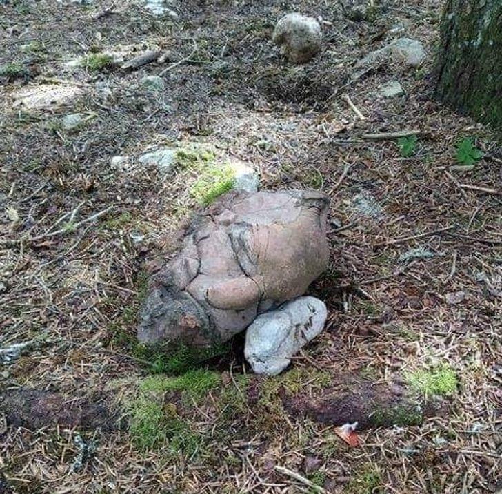 15張看了「忍不住想歪」的食物錯亂照 岩石出現「半個人頭」?
