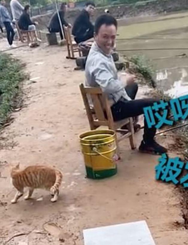 影/喵界神偷!貪吃貓「鬼祟偷魚」被抓包後笑不出來