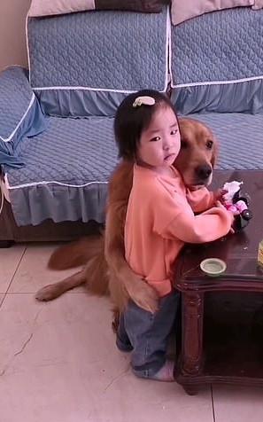 可愛阿金「伸手手護小主人」 媽媽投降:「怎麼罵得下去啦!」
