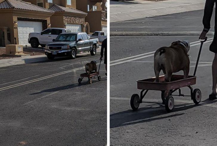 18個證明「毛孩心機很重」的秘密畫面 老鼠「街頭幹架」嚇壞路人