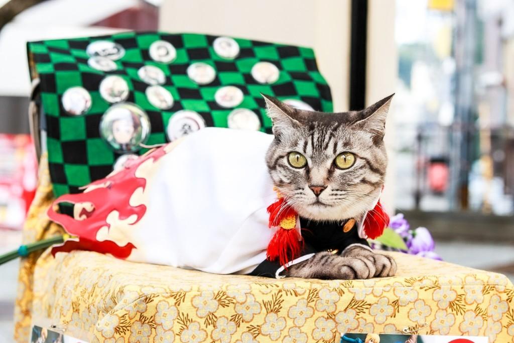 鬼滅之「無限貓咪」篇?貓之呼吸Cosplay可愛度爆表 炎柱眼睛被神還原!
