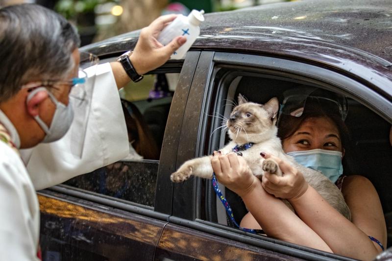 抗疫版「得來速寵物祝福」超吸睛 「搖窗、灑聖水」2步驟搞定!