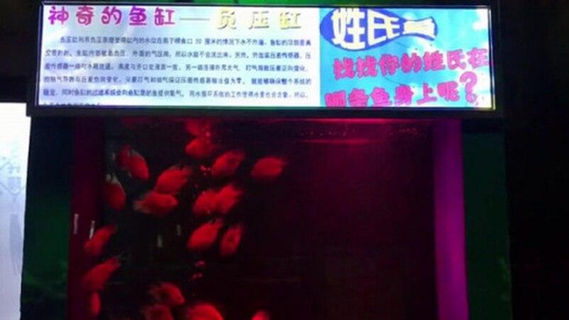 魚身上寫「姓氏」吸引遊客 被罵爆還嘴硬:教育效果超棒!