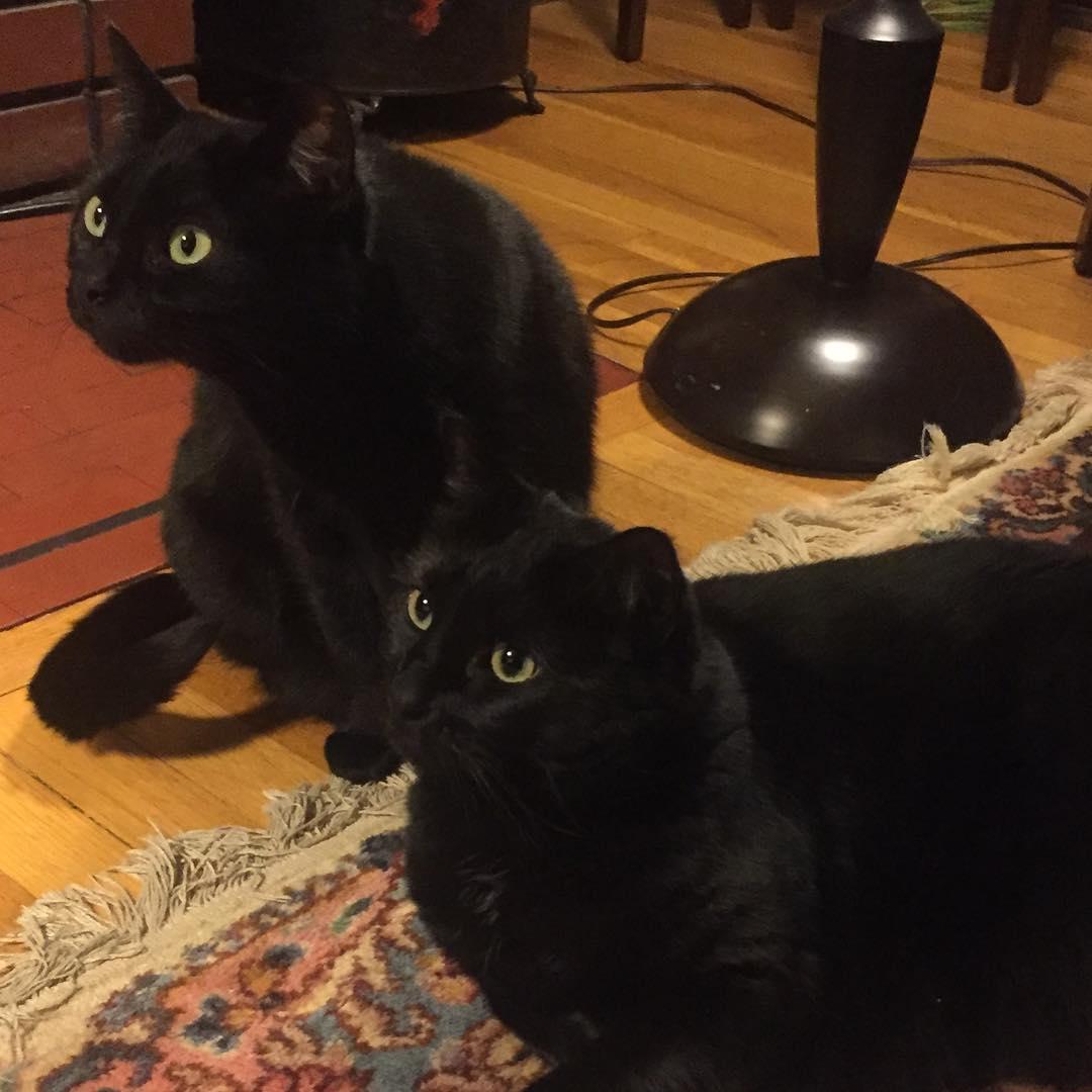 被膠帶整過?黑貓「經過門口」就高空彈跳...連人都被當跳箱