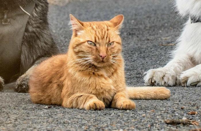 裝錯靈魂!被狗狗養大「把自己當狗」的愛散步小貓咪