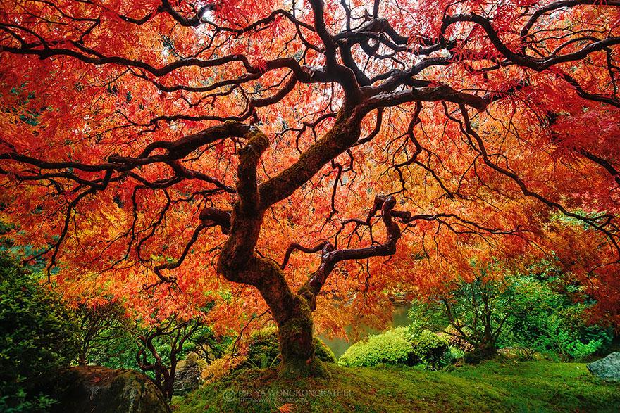 美到窒息!12個「春天VS秋天」唯美變化 日本海濱公園超夢幻