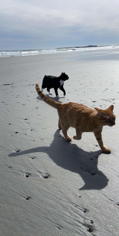 大橘喜歡海邊但「超恨海風」 沙灘爽睡「風一吹就翻臉」超怒
