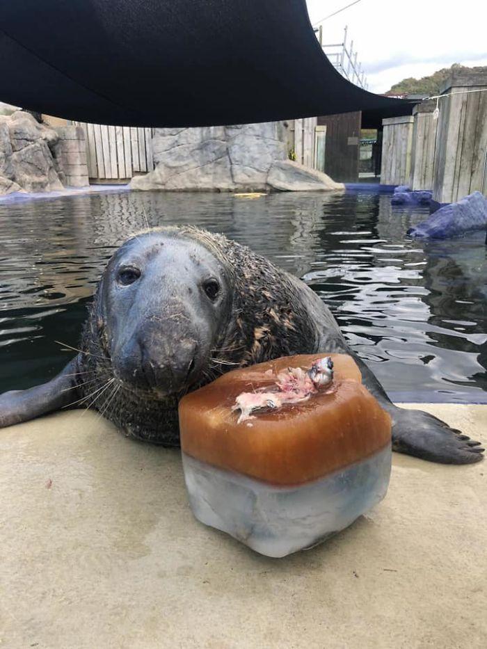 31歲海豹歡慶「長壽里程碑」 收到「特製蛋糕」反應超萌