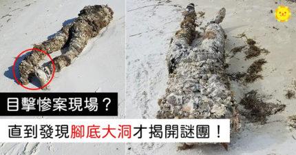 淨灘撿到「無頭身體」志工全嚇瘋 「腳底一個洞」謎底揭曉!