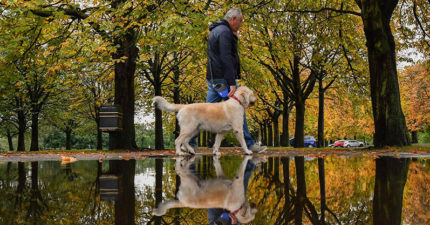 不只最好朋友!DNA研究追溯人類起源:狗是「最古老的夥伴」