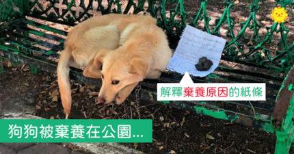 無辜汪「被丟在公園」主人落跑 紙條寫「留牠我很痛苦」讓人不忍罵
