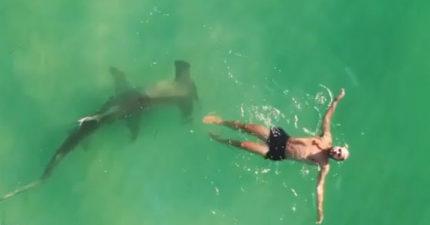 影/不小心闖進地盤!「海底怪物」緊緊尾隨他 超驚險「環繞一幕」全被拍下