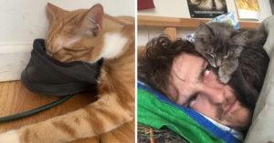 18張「萌寵哪裡都能睡」的證明 「貓鼠一起睡」畫面太超現實